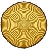 De ringen van de boom