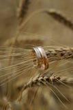 De ringen van de gouden bruiloft Royalty-vrije Stock Foto