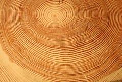 De ringen van het jaar van een boom Stock Afbeeldingen