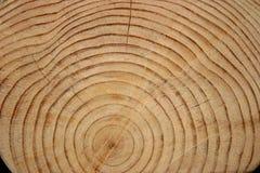 De Ringen van het logboek Stock Foto