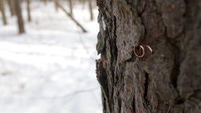 De ringen van de huwelijksdag voor bruid en bruidegom in aard sluiten in openlucht omhoog Gouden bruiloftringen die op tak op gre stock video