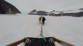 De rit van de hondslee op toboggan bij de gletsjer van Alaska stock videobeelden