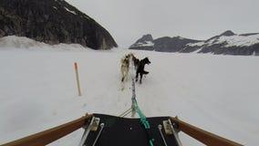 De rit van de hondslee op toboggan bij de gletsjer van Alaska stock footage