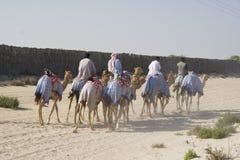 De Rit van de kameel Royalty-vrije Stock Foto