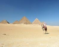De rit van de kameel door Giza piramides Stock Afbeeldingen