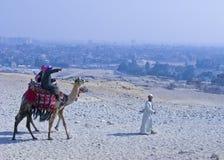 De Rit van de kameel in Giza Stock Foto