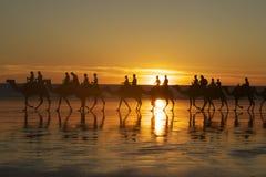 Kamelen op het Strand van de Kabel, Broome Stock Afbeeldingen
