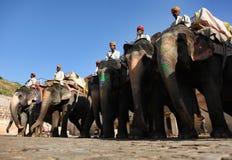 De Rit van de olifant Royalty-vrije Stock Foto