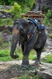 De rit van de olifant (Phuket, Thailand) Stock Foto's