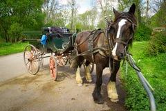 De rit van het paard in Nationaal Park Killarney Stock Afbeelding