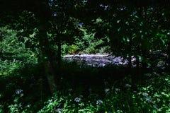 De rivier Royalty-vrije Stock Afbeelding