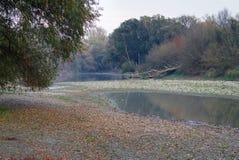 De rivier blind wapen van Donau royalty-vrije stock foto