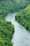 De rivier in bos royalty-vrije stock foto's
