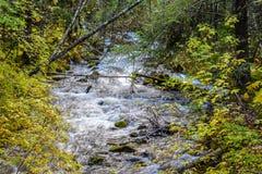 De rivier die onderaan de berg stromen die door rotsen en de herfst wordt omringd kleurde bladeren royalty-vrije stock afbeelding