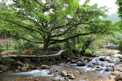 De rivier en de brug in bos Royalty-vrije Stock Afbeelding
