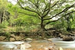 De rivier en de brug in bos Stock Afbeelding