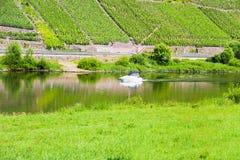 De rivier en de wijngaarden van Moezel Royalty-vrije Stock Afbeeldingen