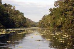 De rivier en de wildernis van Amazonië Royalty-vrije Stock Foto's