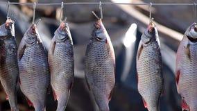 De rivier gezouten vis hangt op een ijzerkruik en is droog stock videobeelden