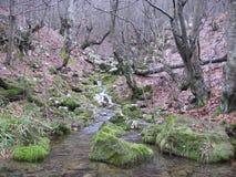 De rivier Grza in Servië Stock Afbeeldingen