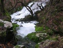 De rivier Grza in Servië Royalty-vrije Stock Afbeeldingen