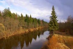 De rivier in hout in de lente stock fotografie