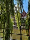 De rivier Ilmenau met het huilen van wilgen stock foto