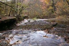 De Rivier Landelijk Tennessee van de eend royalty-vrije stock afbeelding