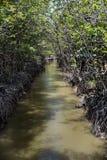 De rivier in de mangrove bij kan de Aapeiland van Gio ` s, Zuid-Vietnam stock afbeeldingen