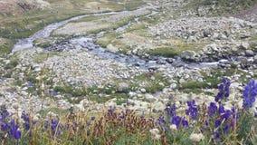 De rivier na de bloemen Royalty-vrije Stock Foto