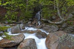 De rivier Sream zet Washinton-gebied via Ammonoosuc-ravijnsleep op Stock Foto
