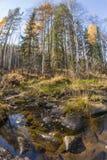 De rivier stroomt in het de herfsthout op rotsen in mos Stock Foto