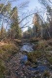 De rivier stroomt in het de herfsthout op rotsen in mos Stock Fotografie