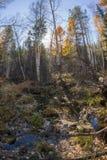 De rivier stroomt in het de herfsthout op rotsen in mos Royalty-vrije Stock Afbeelding