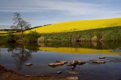 De rivier tot royalty-vrije stock afbeeldingen