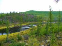 De rivier tussen de heuvels Stock Fotografie
