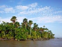De rivier van Amazonië Stock Afbeeldingen