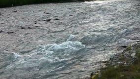 De rivier van de berg Snel stroomwater Rusland Altai stock video