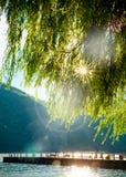 De Rivier van bergenbomen Royalty-vrije Stock Afbeelding