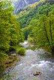 De rivier van Cerna Stock Foto's
