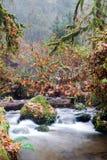 De Rivier van dalingsautumn forest stream bubbling brook mossy stock fotografie