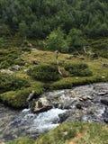 De rivier van de berg Het landschap van de berg Stock Afbeelding