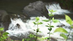 De rivier van de bergstroom stock videobeelden