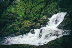 De Rivier van de bergwaterval met diep boslandschap Stock Afbeeldingen