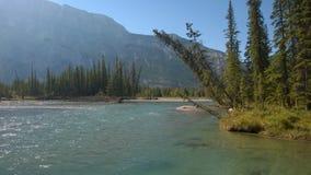 De rivier van de boogvallei banff royalty-vrije stock foto's