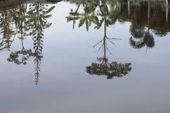 De rivier van de boombezinning mooi in aard Stock Fotografie