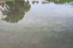 De rivier van de boombezinning mooi in aard Royalty-vrije Stock Foto