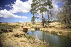 De rivier van de dame visserij stock foto's
