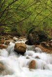 De rivier van de lente in bos Stock Afbeeldingen