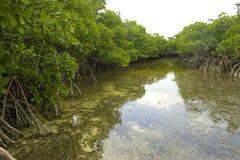 De Rivier van de mangrove Royalty-vrije Stock Fotografie